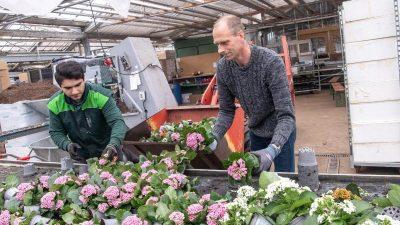 Tausenden Blumen droht der Abfallhaufen