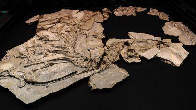Stegosaurier am Nordpol, buddelnde Panzerechsen und gigantisch-mikroskopische Puzzles