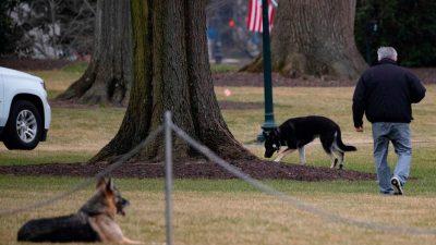 """Bidens Hunde müssen Weißes Haus nach """"Beiß-Vorfall"""" verlassen"""