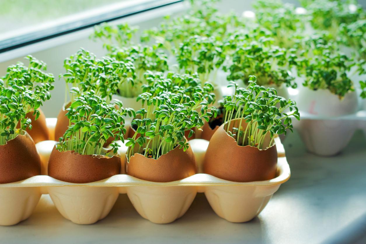 Vitamine von der Fensterbank: Sprossen, Microgreens und Weizensaft