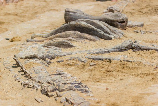 Dinosaurierfossil (Nachstellung)