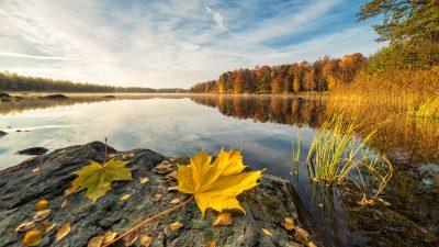 Klassik des Tages: Das Lerchenquartett von Haydn