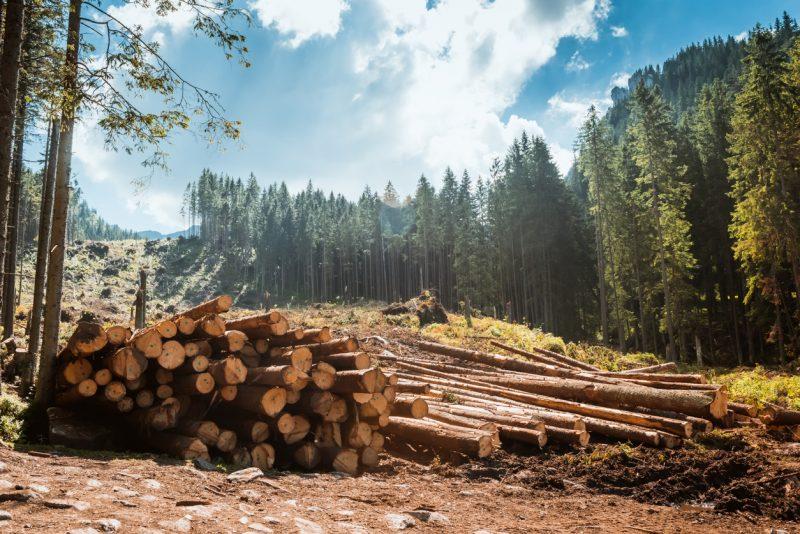 Forst-Verband ruft Waldbesitzer zum Sägestreik auf