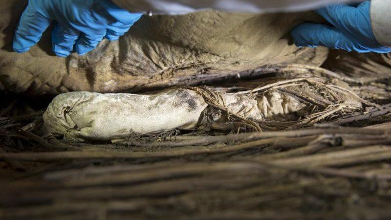 Überreste eines Fötus im Grab von Bischof Winstrup