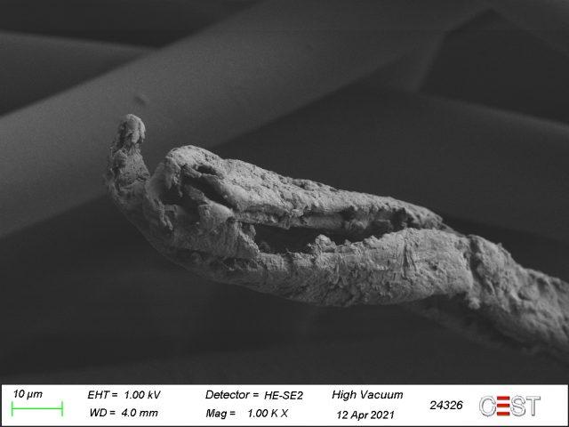 Unter dem Elektronenmikroskop: Schwarze Fäden sind hohl.