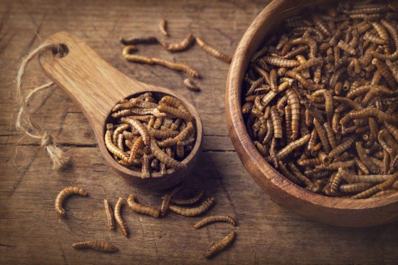 Mehlwurm als erstes Insekt in Europa zum Verzehr zugelassen