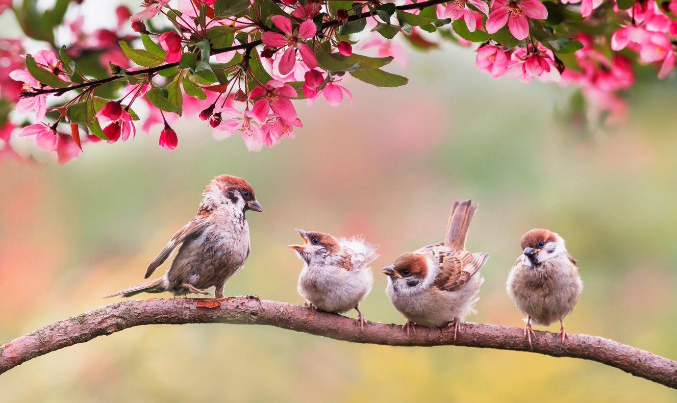 Klassik des Tages: Das Vogelkonzert von Benedetto Marcello