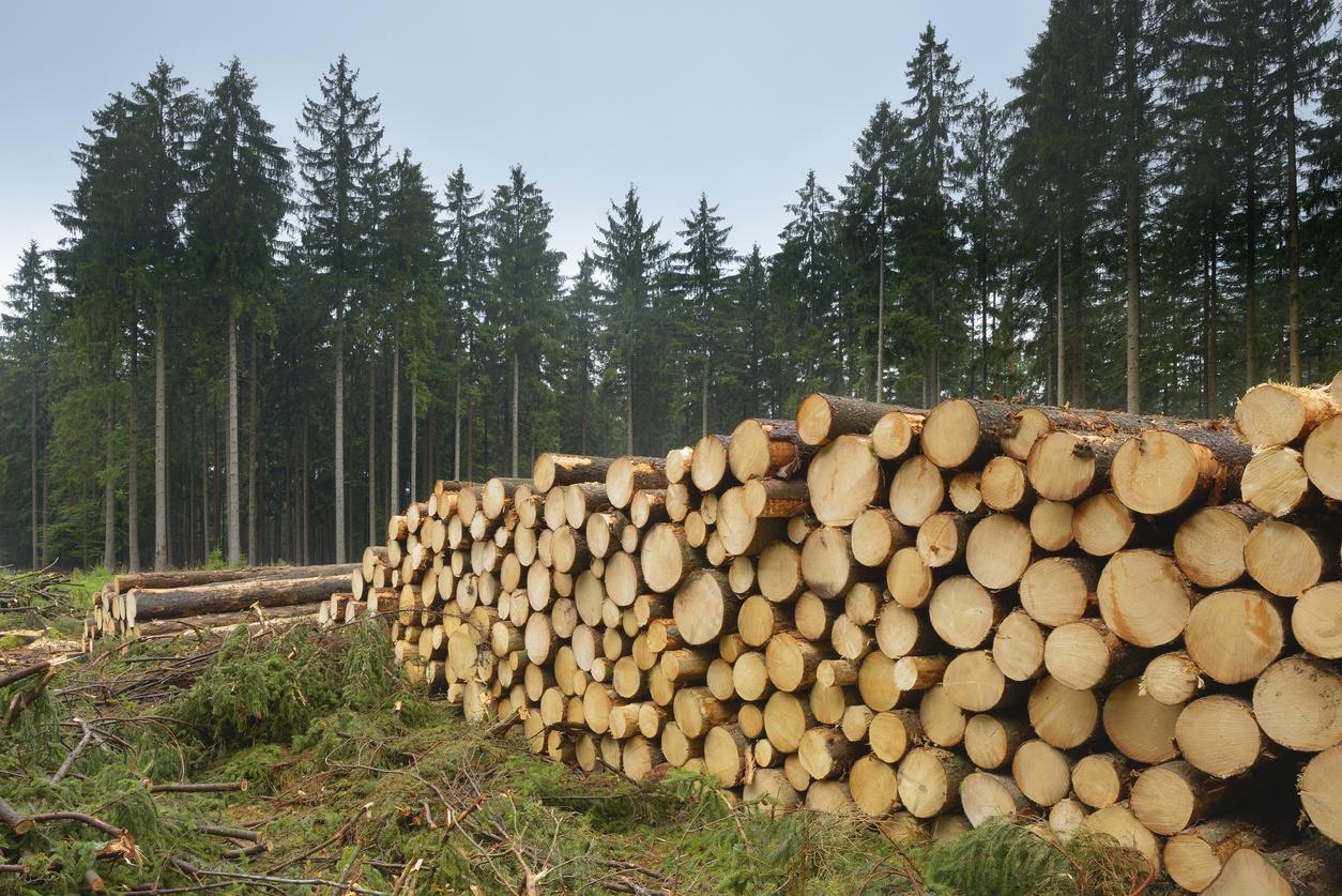 Ausverkauf nach China und USA: In Deutschland wird das Holz knapp und teuer