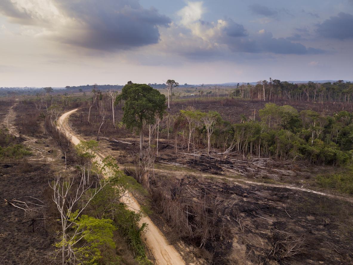 Brasiliens Umweltminister des illegalen Holzhandels verdächtigt
