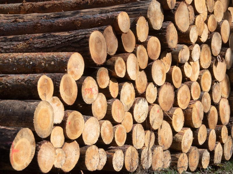 Der weltweite Kampf ums deutsche Holz
