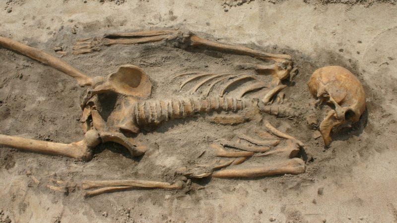Skelett eines der beiden miteinander verwandten Wikinger