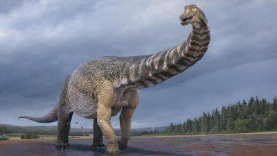 Australotitan cooperensis: Forscher entdecken größte Dinosaurierart Australiens