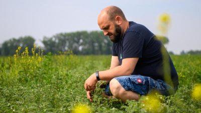 Super-Eiweiß-Pflanze: Landwirte entdecken Kichererbse