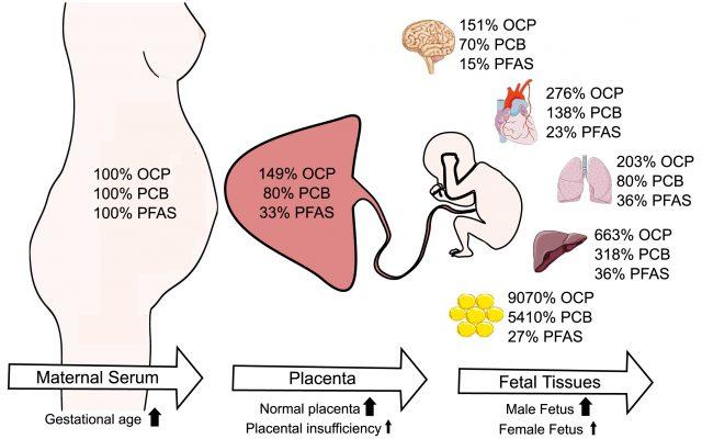 Die Konzentration verschiedener Chemikalien in Mutter und Kind.