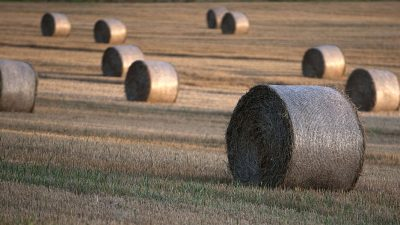 """""""Zeichen für schwache Regierung""""? Landgrabbing wird Thema in Deutschland"""