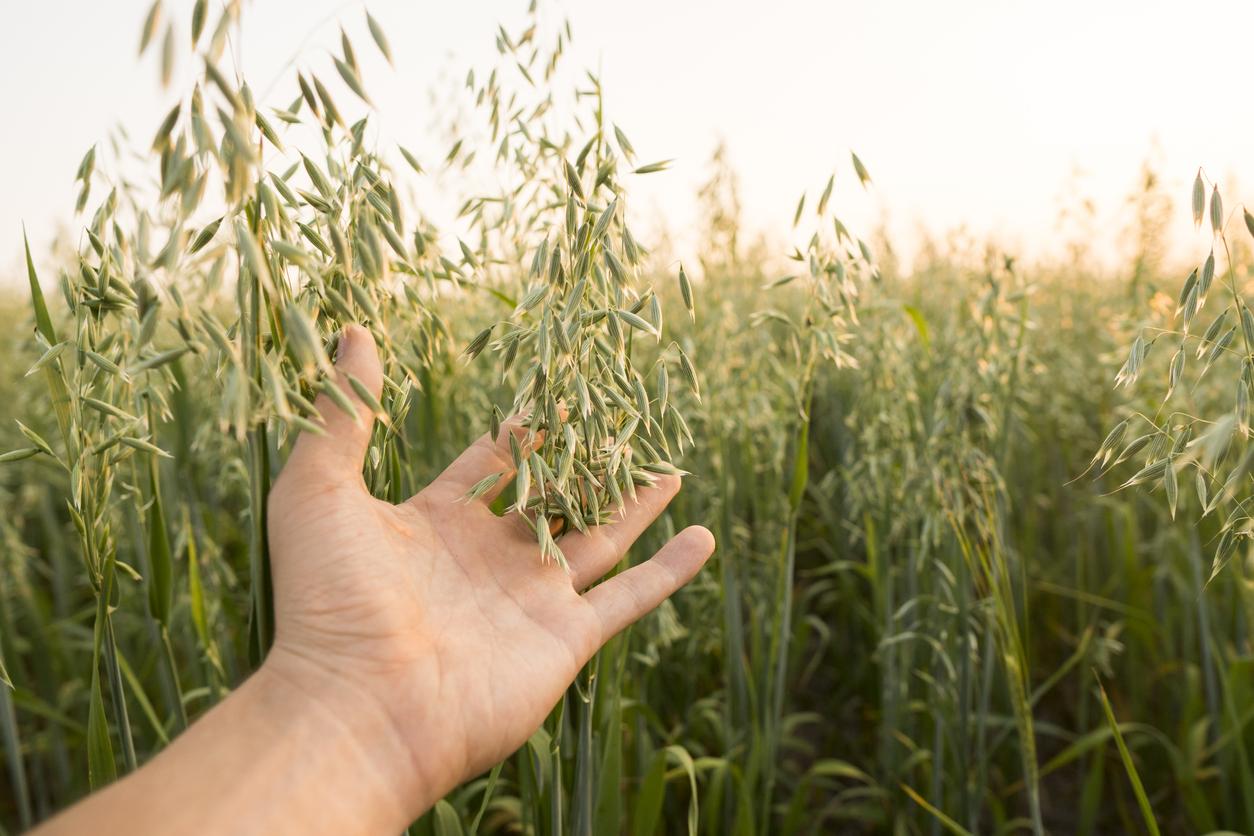 Bauernverband rechnet mit einer besseren Getreideernte als 2020