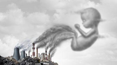 Giftige, längst verbotene Chemikalien in Organen von Ungeborenen, Vogeleiern und Austern nachgewiesen