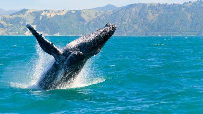 Ägyptische Forscher entdecken bisher unbekannte Wal-Art
