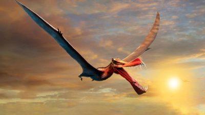 """""""Shaws Speer-Maul"""": Riesiger Flugsaurier-Drache bevölkerte einst Australien"""