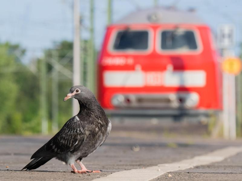Streik bei der Bahn beendet – Betrieb läuft wieder an