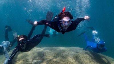 Gut 400 Jahre alt: Koralle im Great Barrier Reef entdeckt