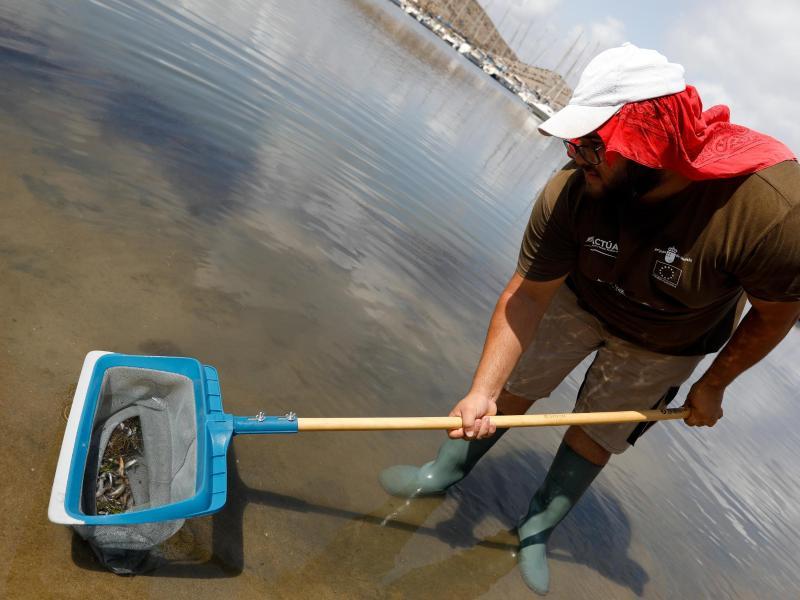 Riesiges Fischsterben in Europas größter Salzwasser-Lagune