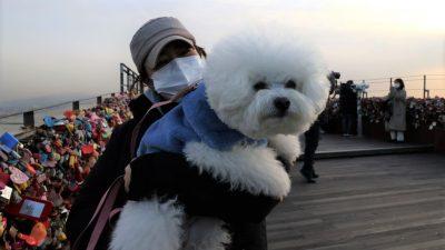 Südkoreas Präsident bringt Hundefleisch-Verbot ins Spiel