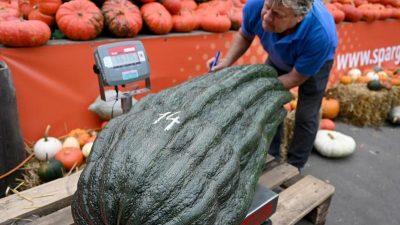 Riesengemüse bei Meisterschaft gekürt: Rekord bei Zucchini