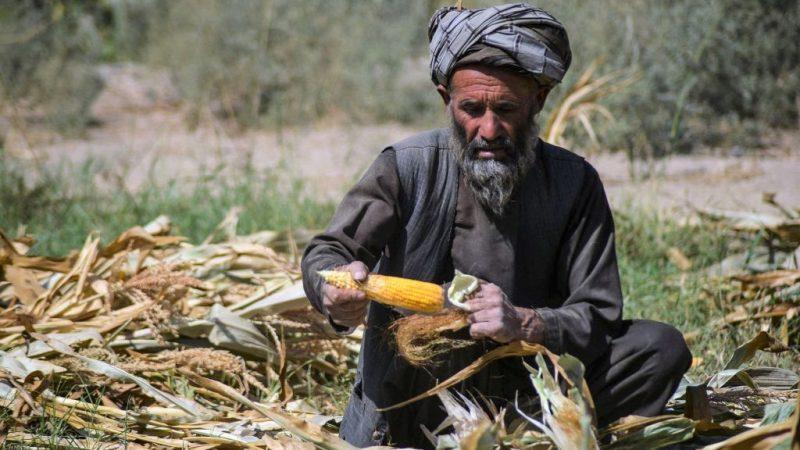 """UNO: Jeder zweite Afghane von """"akuter"""" Nahrungsmittelknappheit betroffen"""